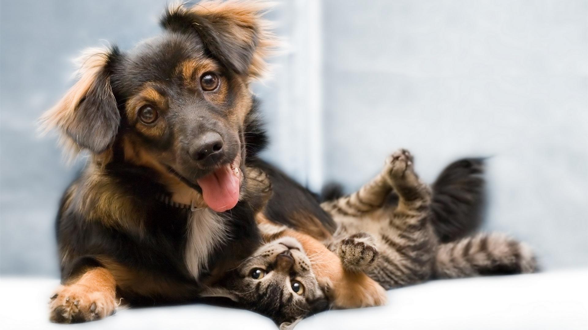 Dog Cat Wallpaper