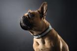 Hundehalsbånd skinn Hunter Spirit Svart