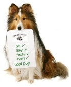Treningsutstyr hund
