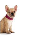 Halsbånd til hund