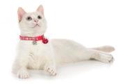 Kattehalsbånd & kobbel