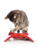 Mat - og vannskåler katt