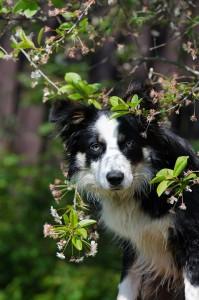 voorjaar hond