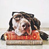 Hundebøker