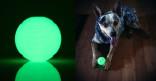 Hundeleke Chuckit Max glow ball