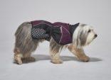 Regndekken Beta Pro purple Non-Stop Dogwear