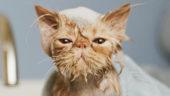 Pelsstell & Helse katt
