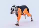 Protector snow heldress hund