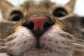 Kattefôr og kattemat