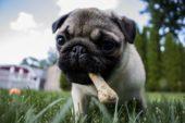 Godbiter og hundesnacks